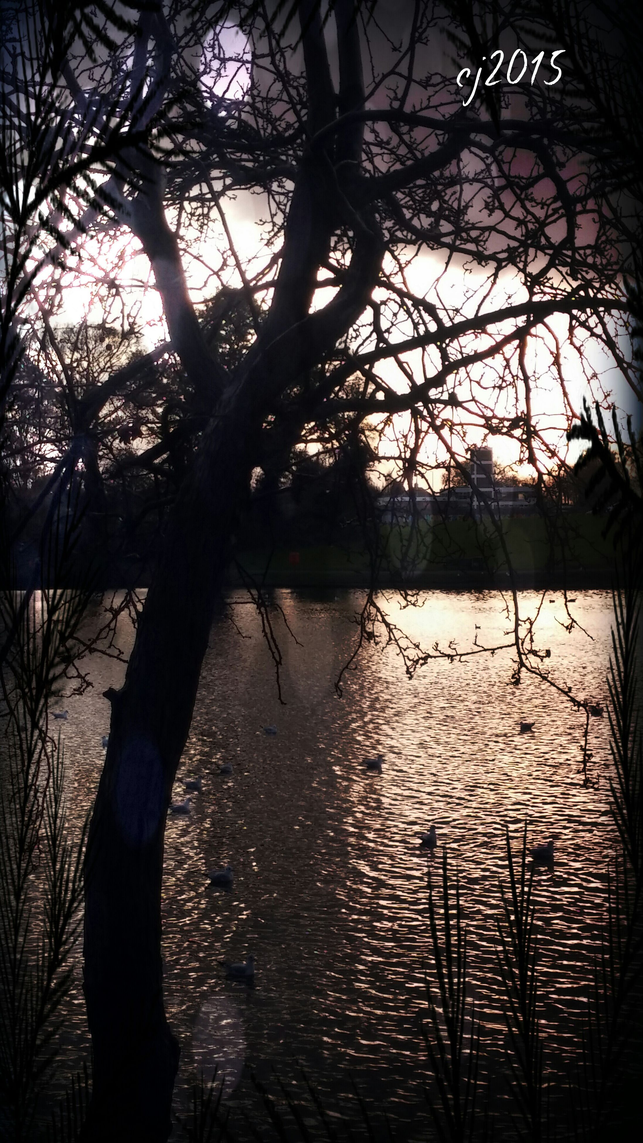 water, silhouette, tree, reflection, tranquility, sunset, lake, branch, tranquil scene, nature, scenics, beauty in nature, bare tree, sky, rippled, idyllic, river, tree trunk, outdoors, waterfront
