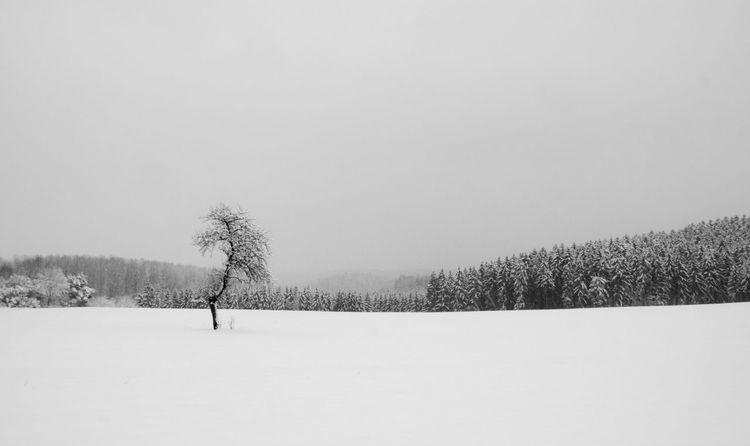 Blackandwhite Nature Winter Black And White Black & White Blackandwhite Photography EyeEm Best Shots - Black + White Nature_collection EyeEm Nature Lover Beautiful Nature
