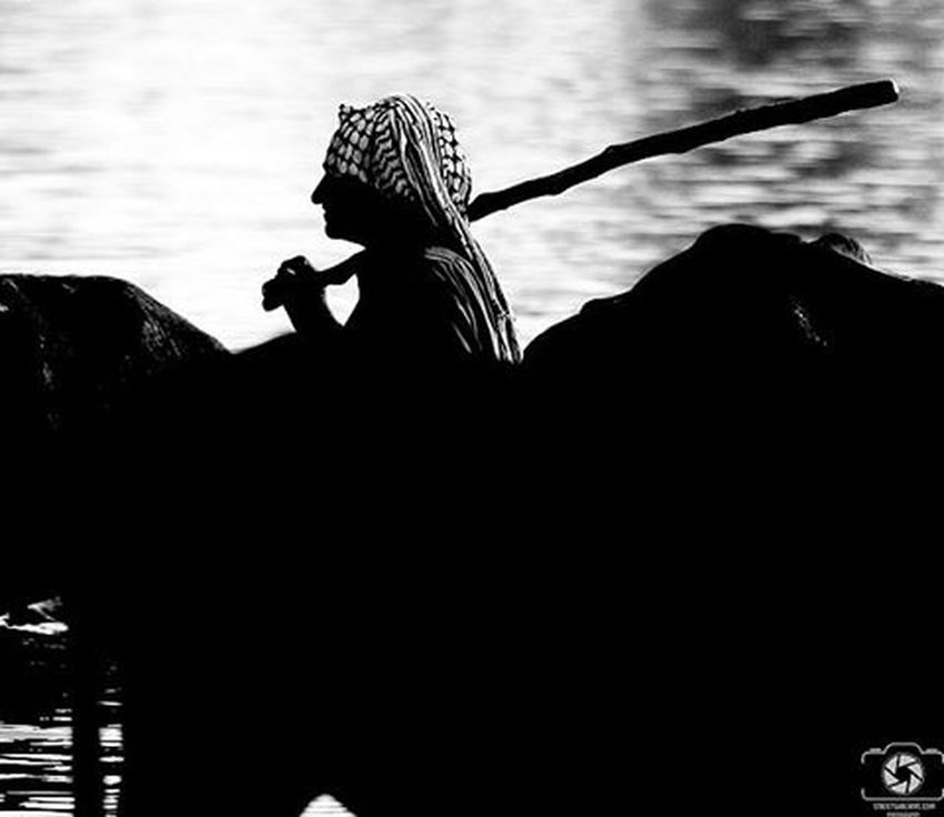 Photograph Photographer Photooftheday Photo Iran Photoshoot Photos Photographylovers Blackandwhite Bw Black White Silhouette River Cow Ahwaz Ahwazpictures Ahvaz Karoon ایران اهواز گاومیش-آباد