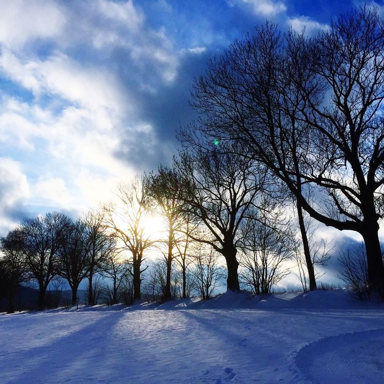 Winter Trees Wintertime Winter Snow ❄ First Eyeem Photo