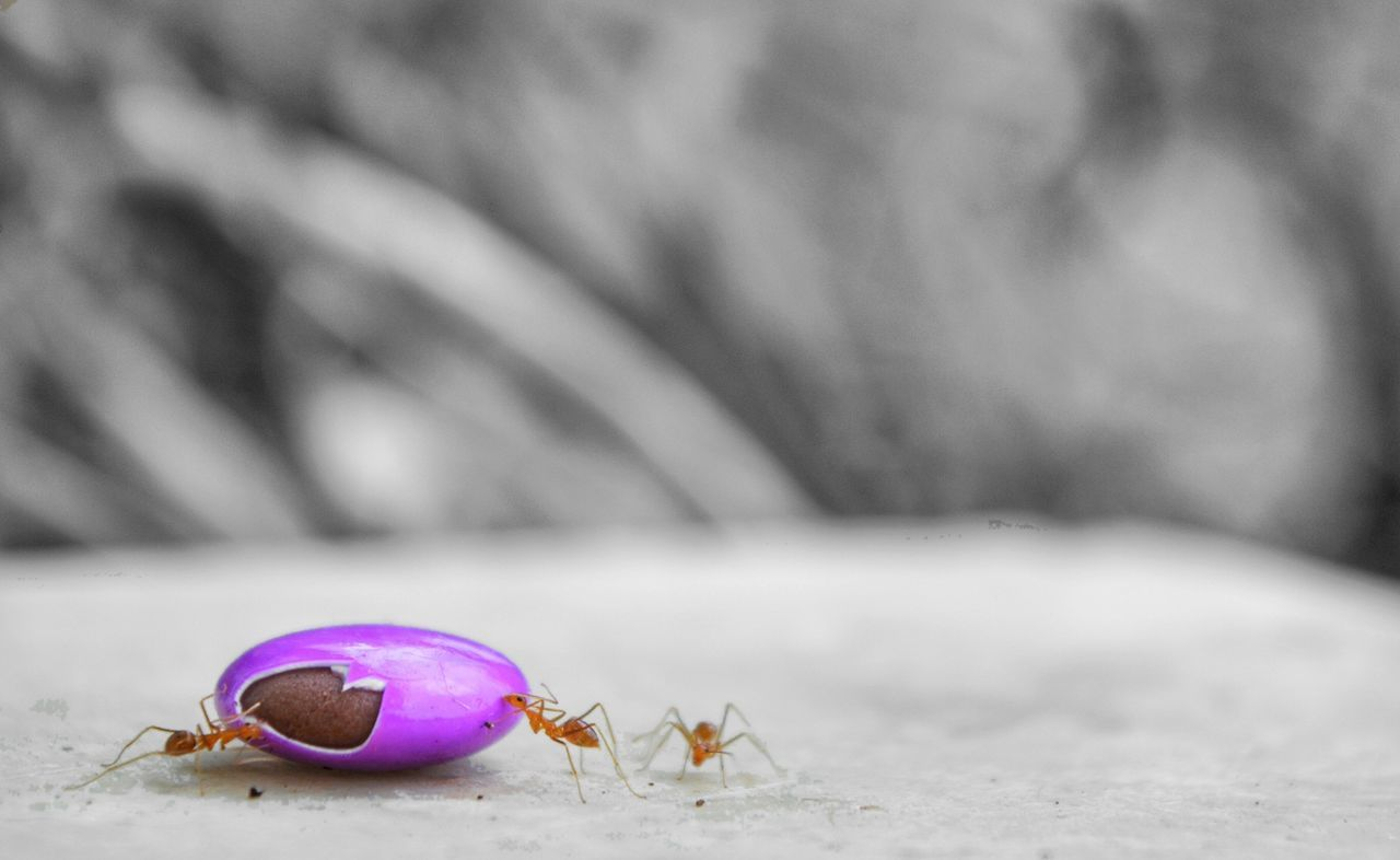 Taking Photos ants with their baut for the day.. Cadbury Gems Cadburygems Ants At Work Killers