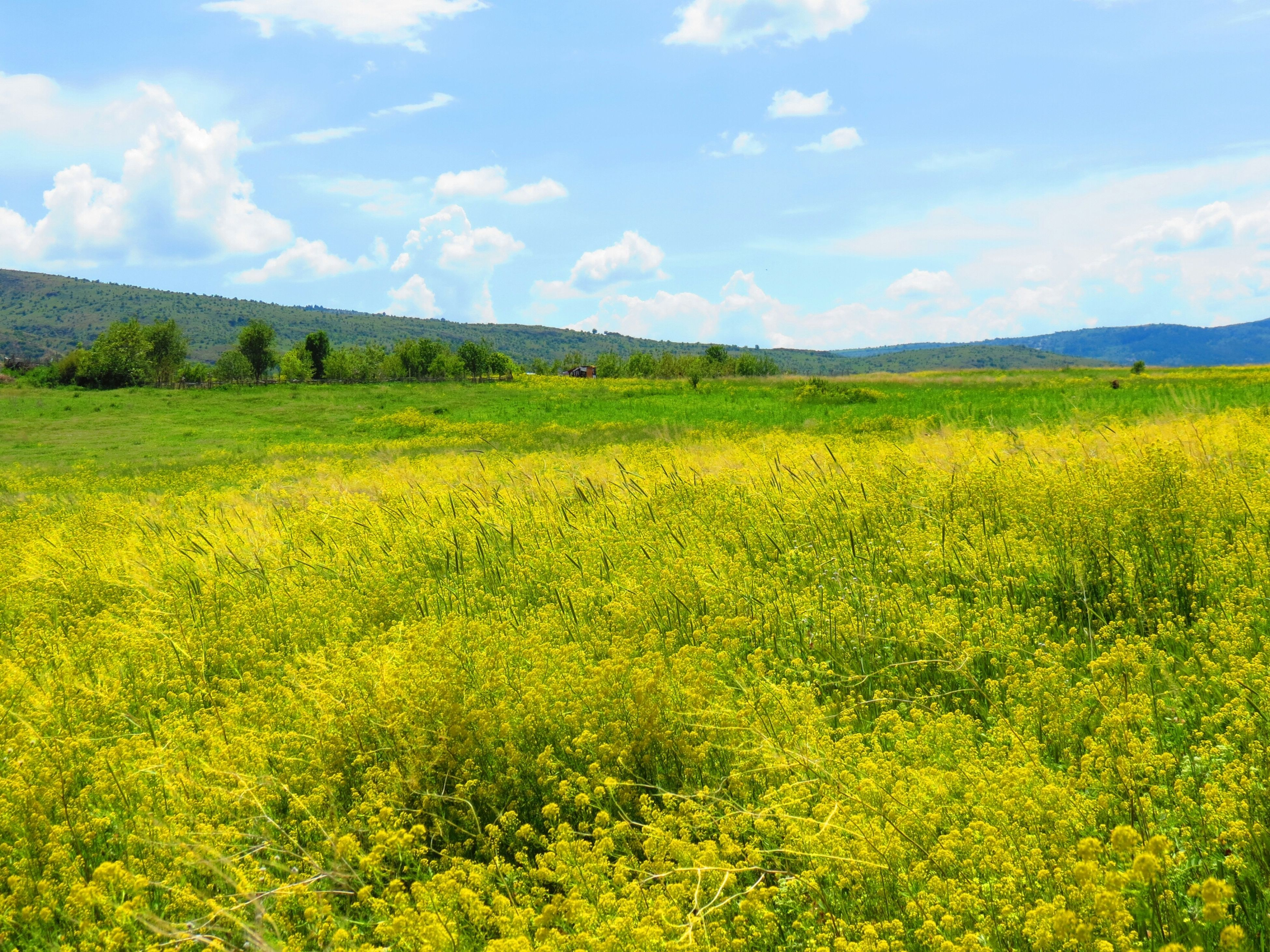 flower, yellow, beauty in nature, field, landscape, growth, tranquil scene, rural scene, sky, tranquility, agriculture, scenics, nature, freshness, farm, oilseed rape, crop, plant, cloud - sky, cloud