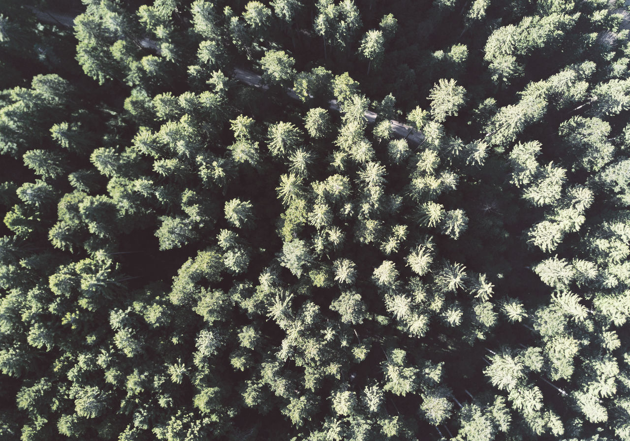 Beauty In Nature Bleached Dronephotography Flying High Forest Green Color Nature Outdoors Structure Trees Woods