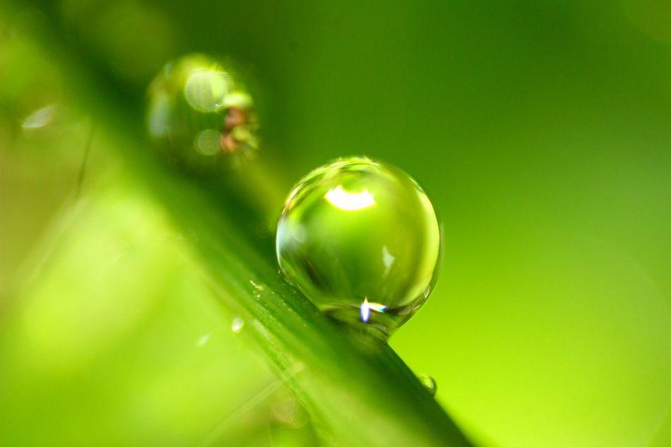 Nature Macro Water Droplets Rain Drops