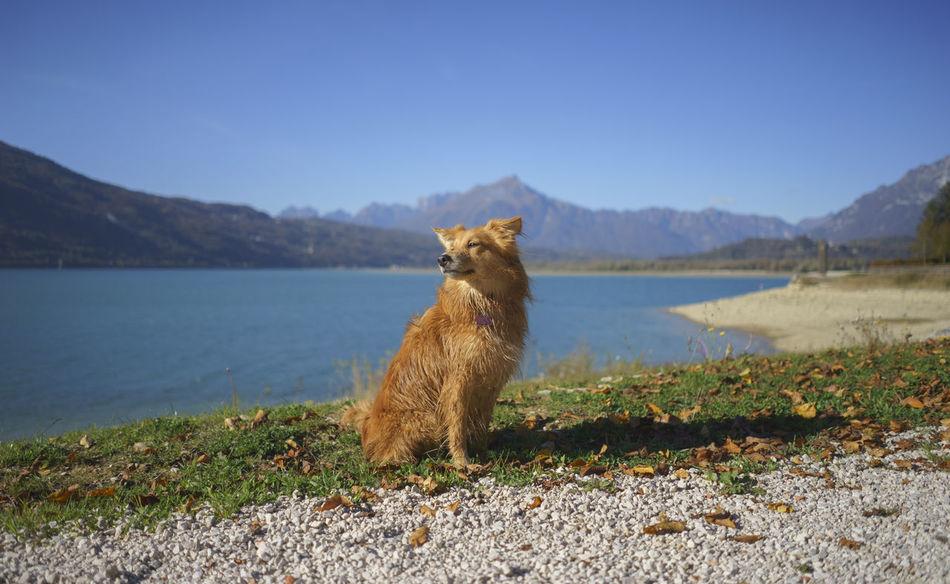 Animal Blue Brown Dog Half Caste Italy Lake Mammal Mestizo Mountain One Animal Outdoors Pets Portrait Santa Croce