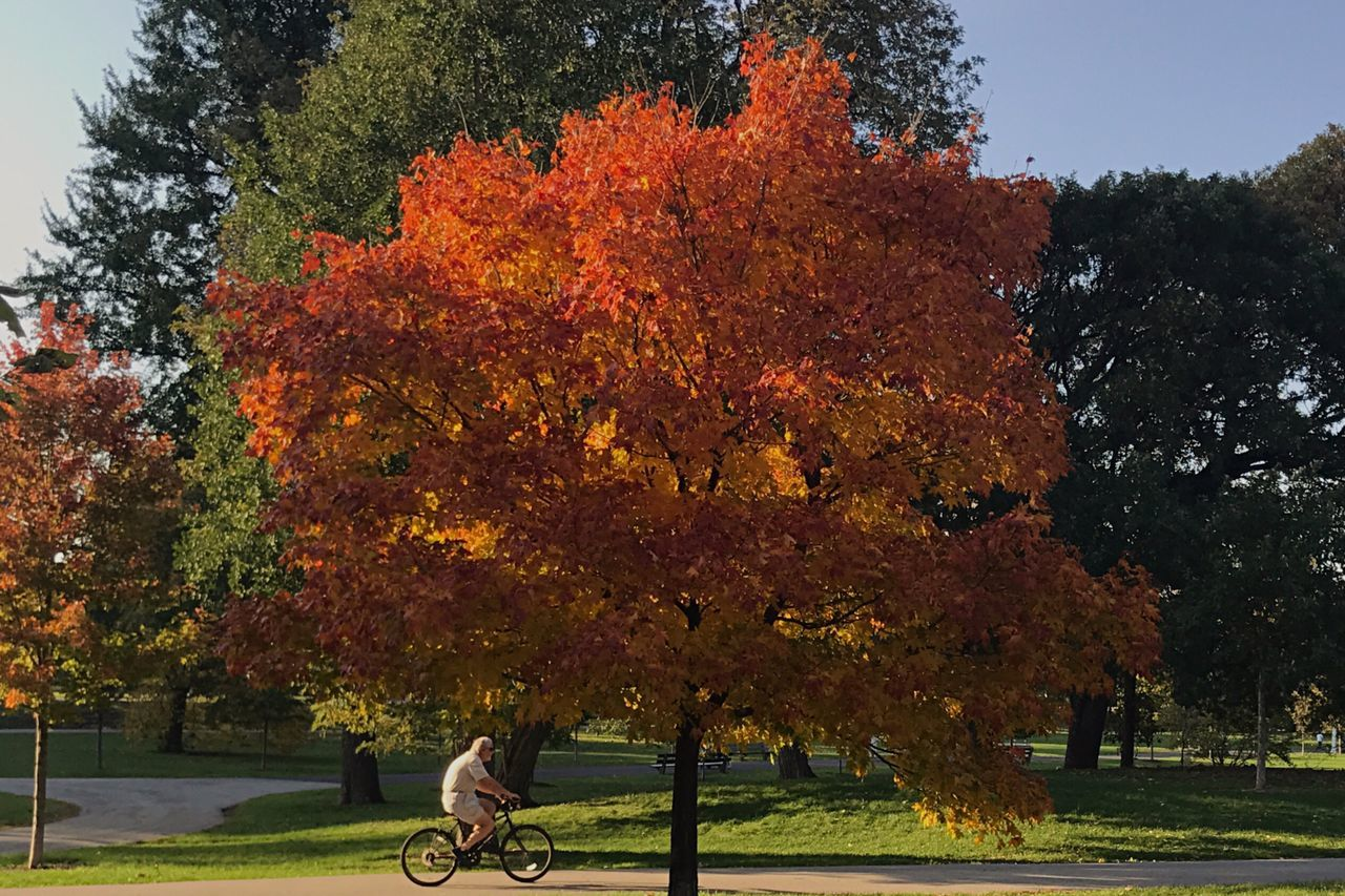 Off Season Autumn Tree Beauty In Nature Outdoors Scenics Lakefront Chicago Urban Landscape