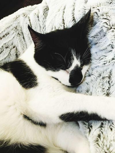 Cat naptime blanket cute animals wintertime warm heartwarming happy moment cats