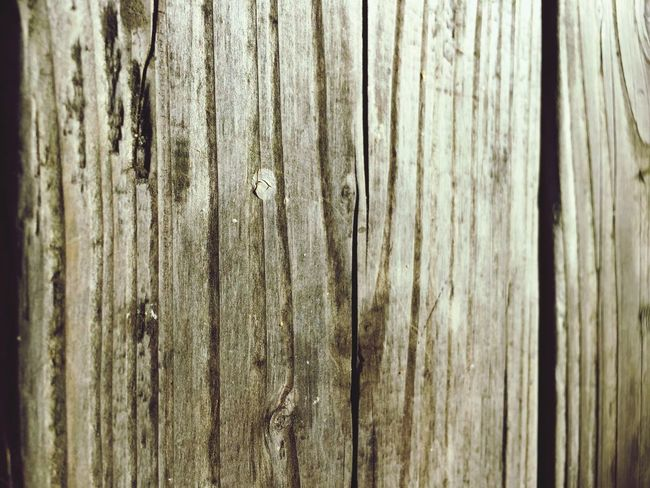 Full Frame Backgrounds Wooden Textured  Close-up Wood - Material Plank Growth Nature Day Weathered No People EE Love Connection! Taking Photos EyeEm Best Shots Eye4photography  Light And Shadow Eyemphotography Outside Photography Built Structure