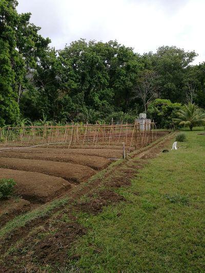 Sembrando Comida. Agriculture First Eyeem Photo