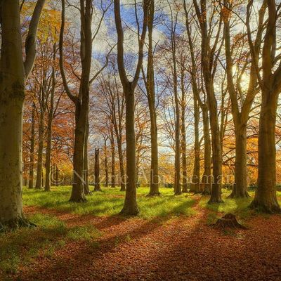 Autumn light | Dublin Autumn HDR Dublin Ireland Lovedublin