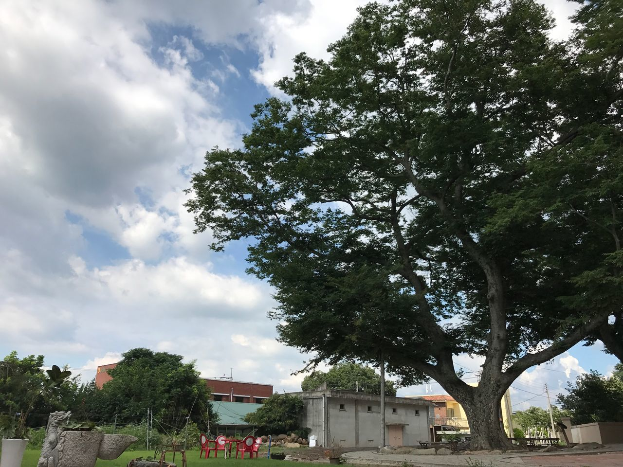 tree, architecture, building exterior, growth, sky, built structure, nature, day, no people, outdoors