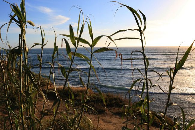 By The Sea Seaside Through The Leaves Tall Grass Tall Grasses Ocean View Oceanside Ocean Waves California The KIOMI Collection San Diego Cliffside Overlooking The Sea Seaside_collection Coast Coastal