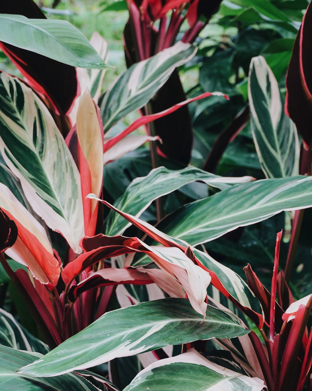 Colour Palette Eyeemphoto Plants And Flowers Plant Life Plant Green Pink Edenproject Palm Trees Garden Plant Photography Plants Collection England