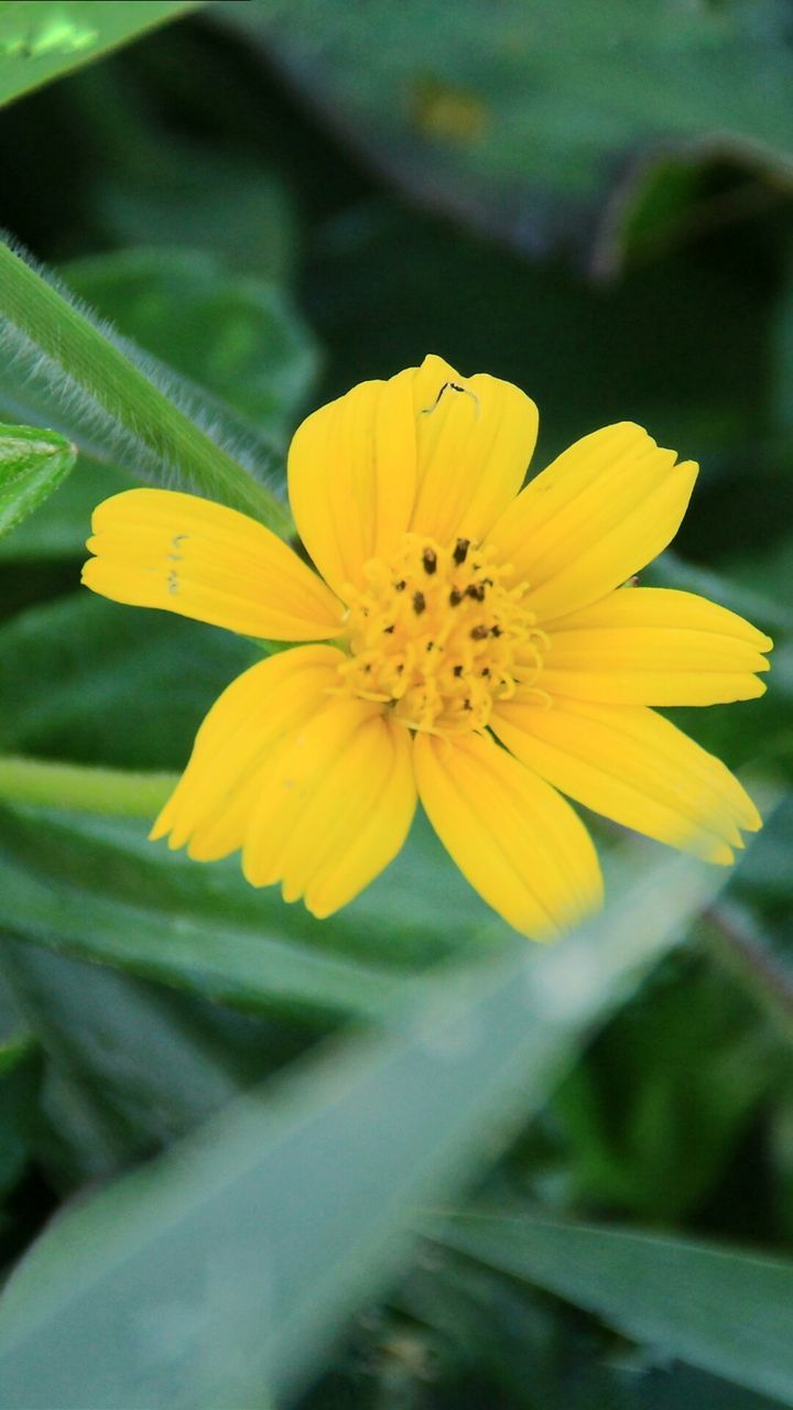 flower, yellow, petal, fragility, flower head, beauty in nature, nature, growth, freshness, plant, no people, close-up, outdoors, day, blooming