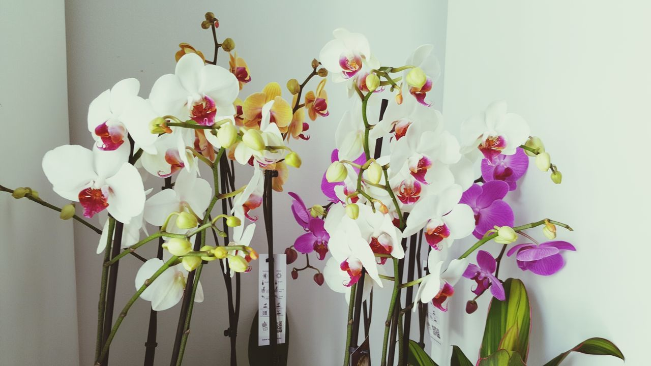 Beautiful stock photos of orchid, Beauty In Nature, Close-Up, Flower, Flower Shop