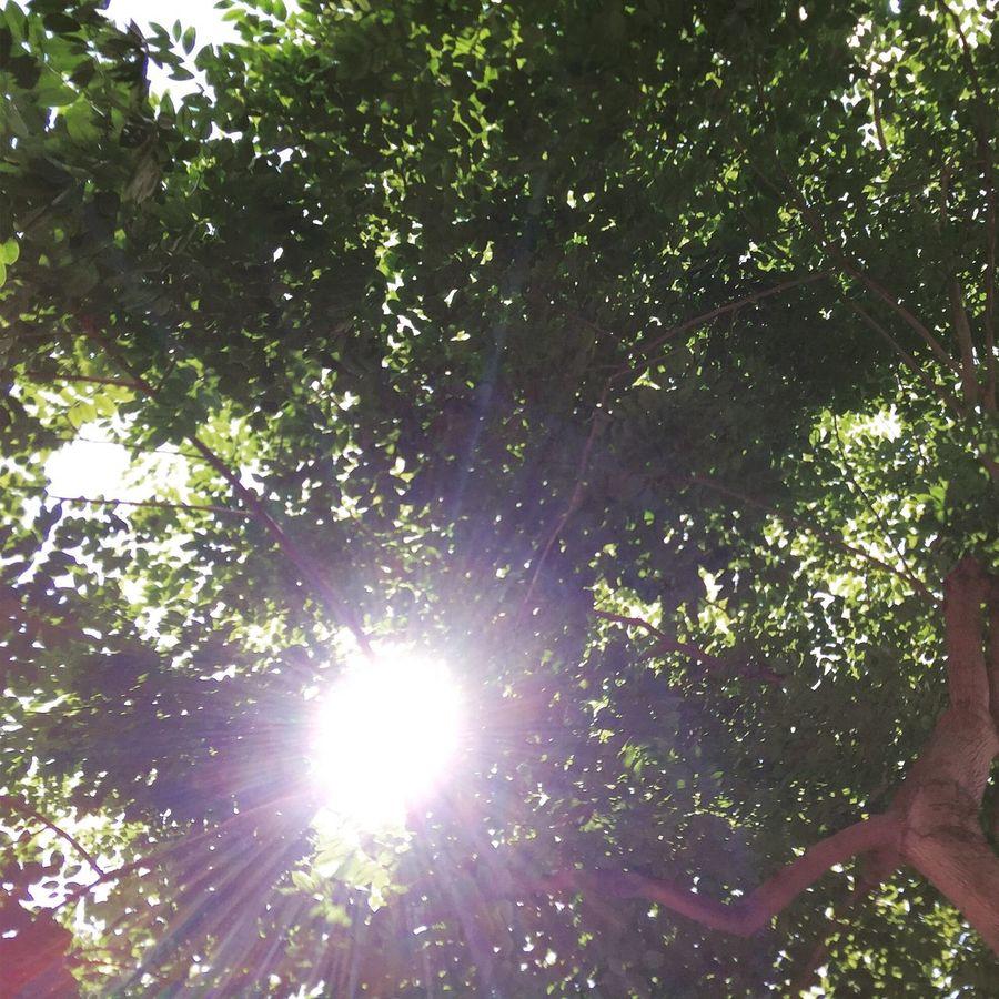 Sun Ray Sun Rays Through The Trees Blind Shots