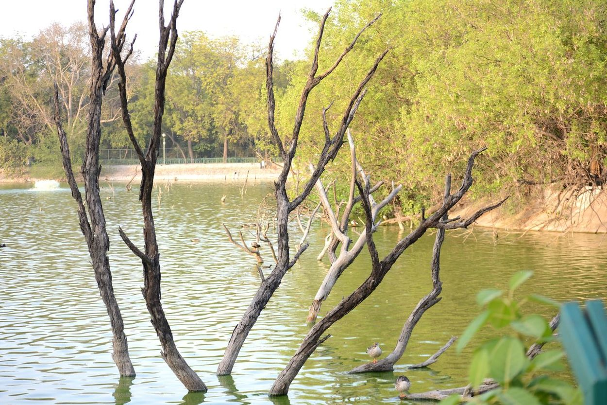 Learn & Shoot: Simplicity Naturelovers Natural Pattern Beauty Exploring Delhidiaries Indiapictures Hauzkhasfort Dead Plant Nature_collection Landscape Outdoors