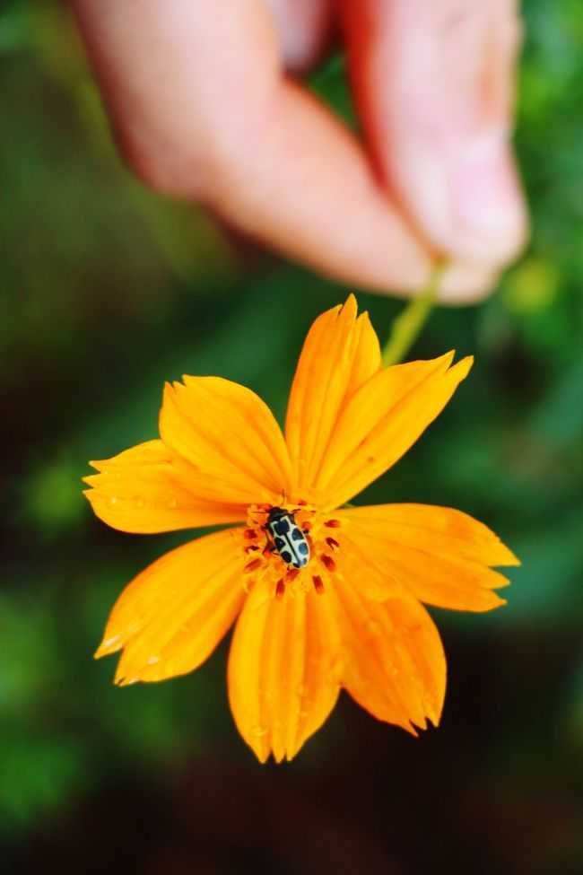 Nature Flower Ladybird Ladybug Hand Naturaleza Colores Mano Catarina Plantas Plants Blumen Umwelt Environment Perfection Joaninha Nature's Diversities