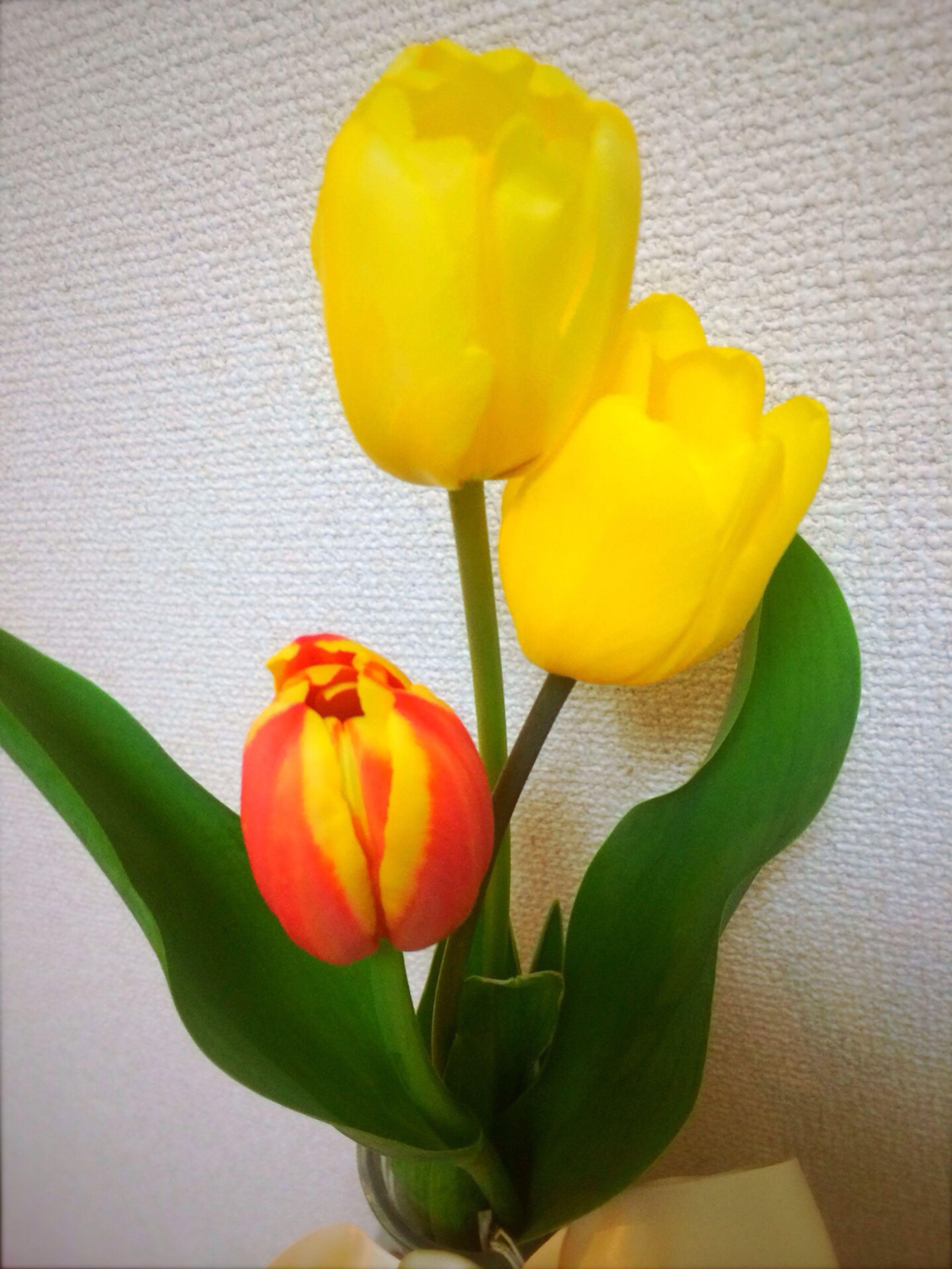flower, freshness, yellow, petal, indoors, flower head, fragility, tulip, vase, wall - building feature, stem, close-up, home interior, flower arrangement, plant, leaf, orange color, beauty in nature, studio shot, growth