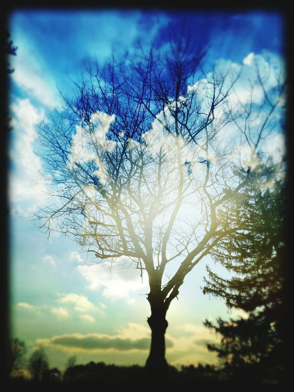 My Eye To The Sky Sky Porn My Perspective My Cloud Obsession ☁ Sunshine From My Point Of View Creative Photography This Is My Art!!! No Edit No Fun Feeling Inspired Sky And Tree Beautiful Sky Beautiful View I Love Bare Trees Winter Trees Winter 2016 Ladyphotographerofthemonth