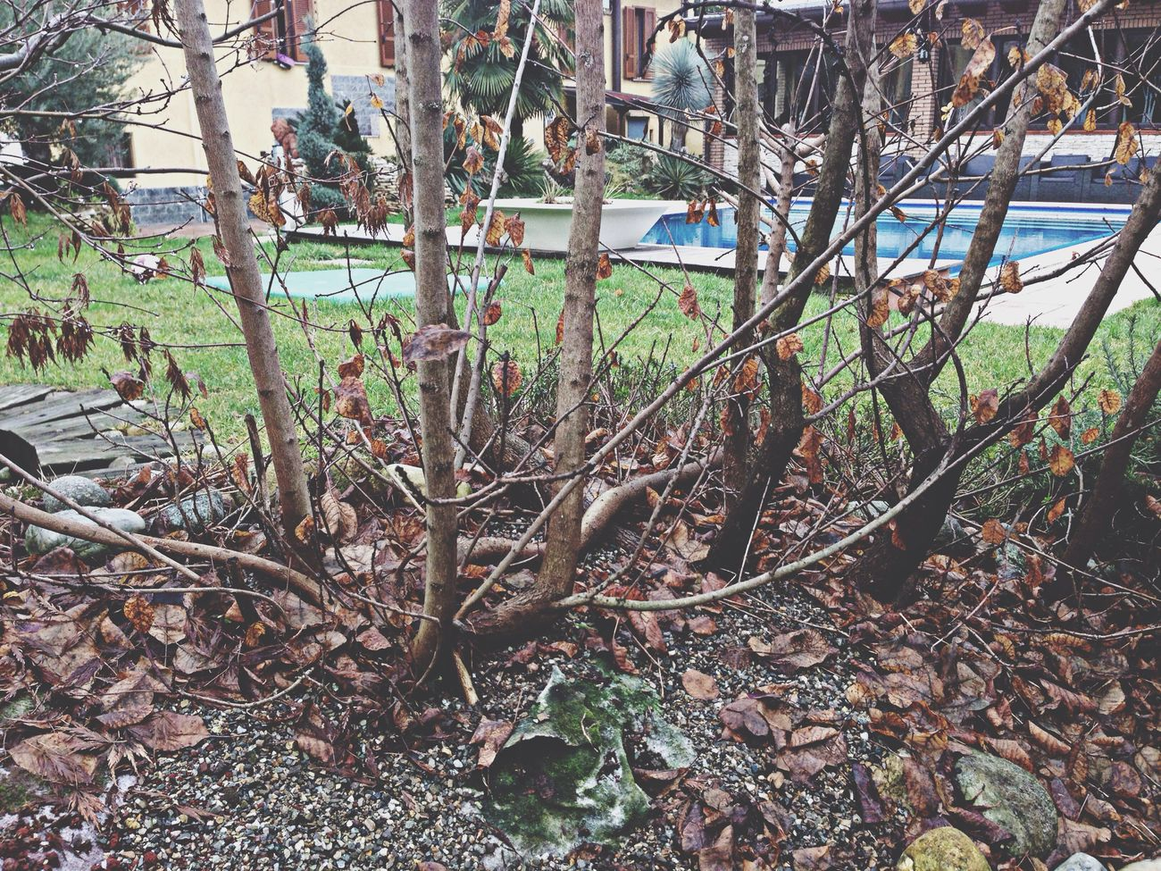 My garden, Milan, Italy My Garden Milan Il Mio Giardino Milano