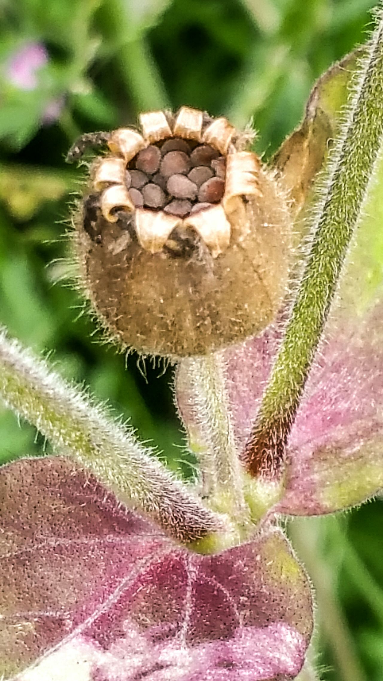 Hollingworth Lake EyeEm Best Shots - Nature EyeEm Flower Plant EyeEm Nature Lover Walking Around Milnrow Seed Pod