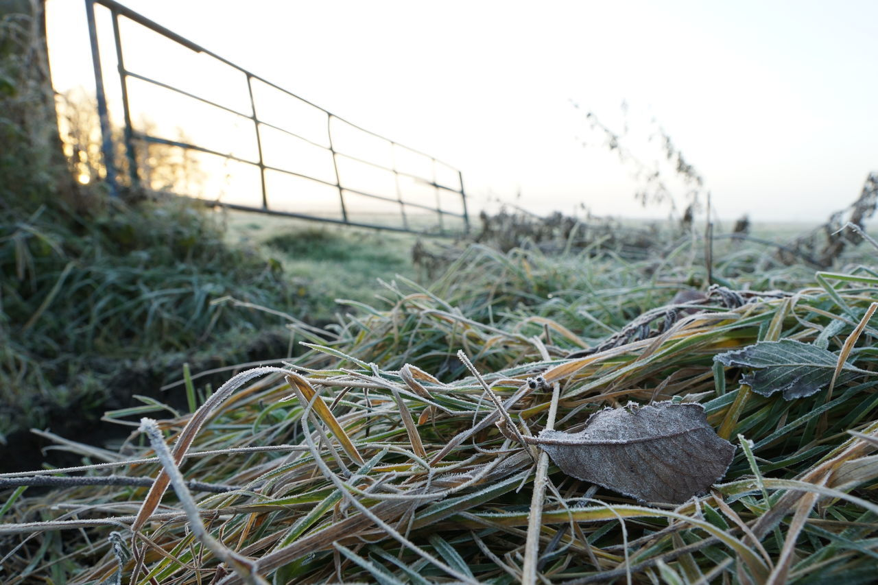 Frosty leaves and grass Beauty In Nature Close-up Cold Day Field Focus On Foreground Frost Gate Grass Haze Leaf Leaves Of Grass Meadow Morning Morning Light Nature No People Open Outdoors Pasture Seasons Sunrise Tranquil Scene Tranquility Winter