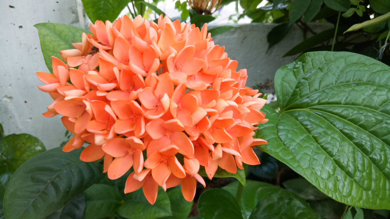 flower, growth, beauty in nature, petal, nature, leaf, freshness, fragility, blooming, flower head, plant, orange color, outdoors, day, green color, close-up, no people