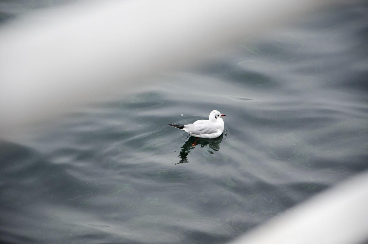 Acqua Animal Animali Bird City Gabbiano Geneva Geneva Lake Geneve Lago Lake Nature Outdoors Seagull Uccello Water Water Bird