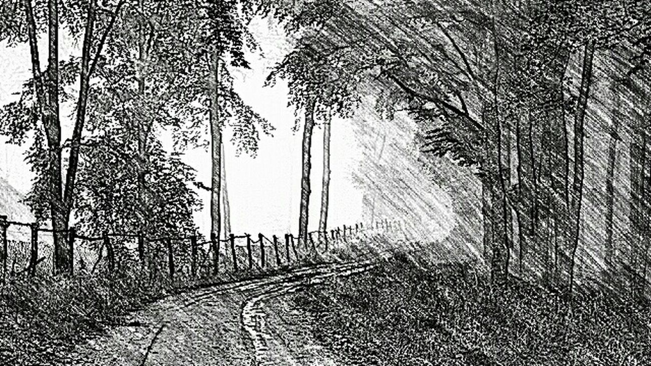 Waldweg bei Seesen . Sketch 2015 Art Black And White Trees Forest Nature Park Way