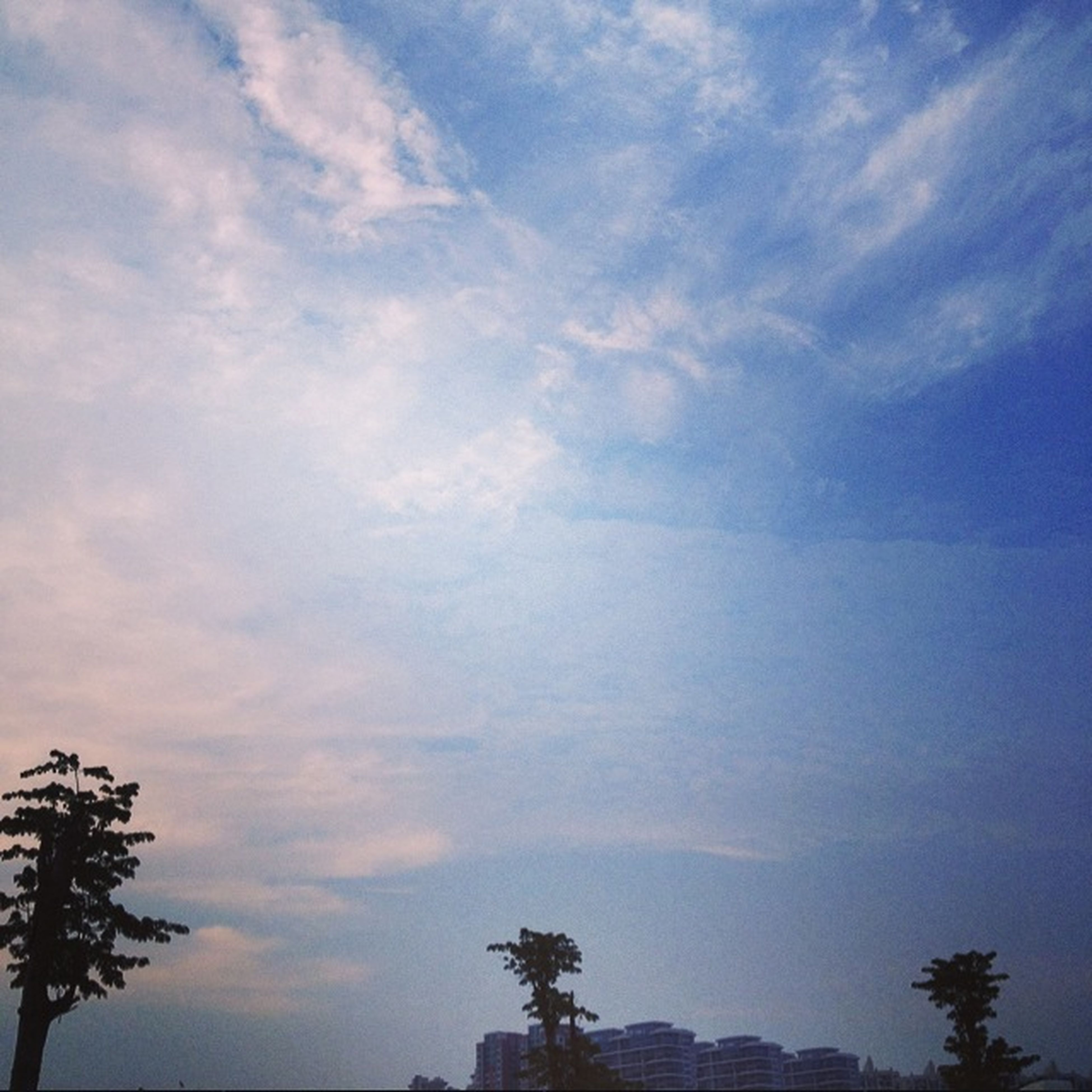 sky, tree, low angle view, silhouette, tranquility, cloud - sky, beauty in nature, tranquil scene, scenics, nature, blue, cloud, growth, cloudy, idyllic, outdoors, no people, dusk, high section, sunset