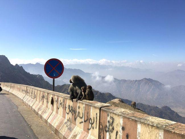 Hitching Hanging Out Hi! Monkeys WILD MONKEYS Streetphotography Roadside Shots Nature's Diversities Baboons Animals Wild Wild And Free Desert Saudi Wildlife