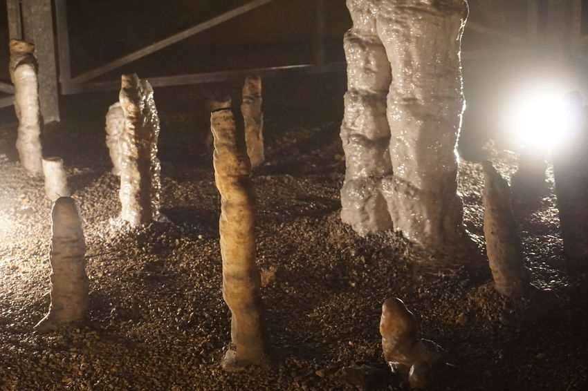 Animal Themes Cave Cavern Day Domestic Animals Geological Geological Formation Geology Mammal Nature No People Outdoors Stalagmite