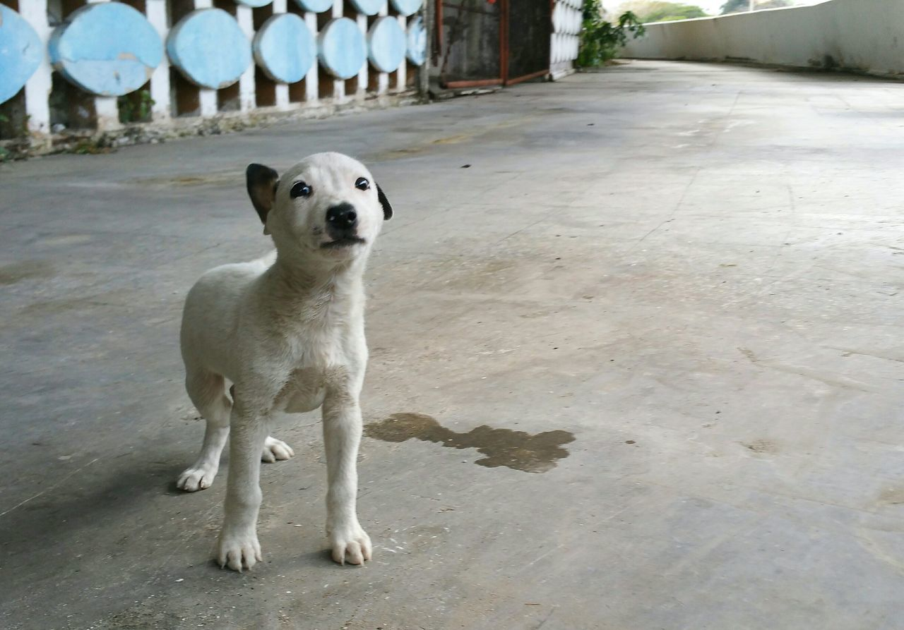 Beautiful stock photos of cuba, Animal, Animal Themes, Close-Up, Dog