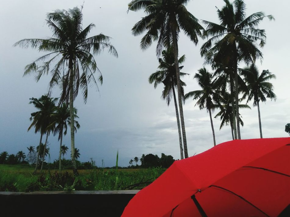 Tree Palm Tree No People Outdoors Nature Day Sky AllSaintsDay Eyem Best Shots Eyeem Philippines Beauty In Nature