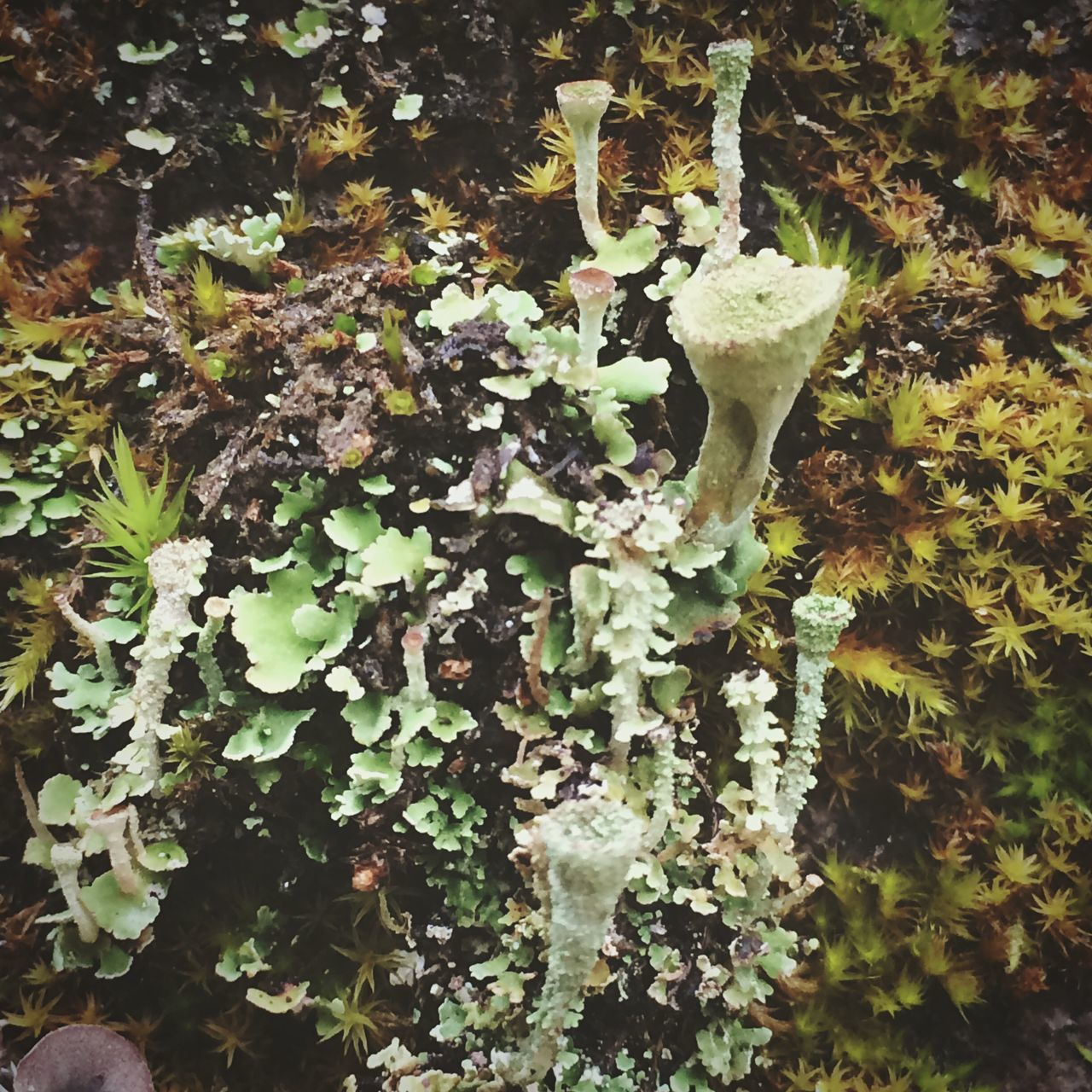 growth, nature, leaf, plant, beauty in nature, fragility, no people, tranquility, day, outdoors, green color, close-up, lichen, fungus, freshness, tree