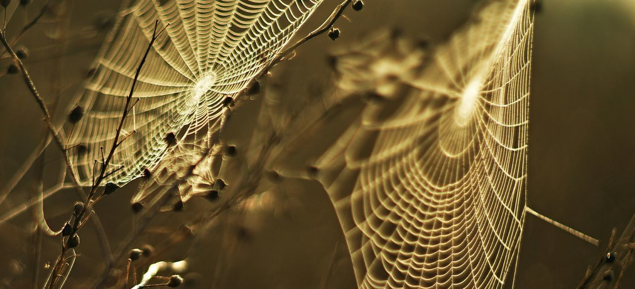 Along came a spider. EyeEmNewHere Spider Web Spider Webs Spider Closeup