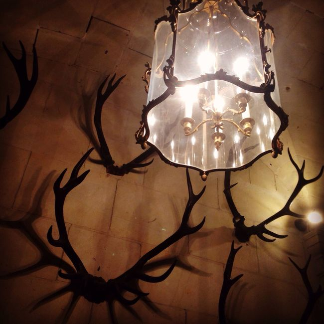 Light Antlers