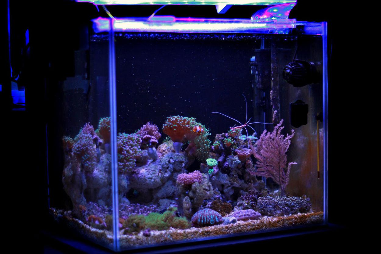 Aquarium Photography Reef Tank Lps Coral Reefer Fish Tropical Coral Reef Polyps Tank Scene Aquarium Photography Reef Coral Photographer Reef Nano Aquarium Nanotank Nanoreef Marine Undersea Life Nemo Fish Nemo Coral Sea Saltwatertank EyeEmNewHere