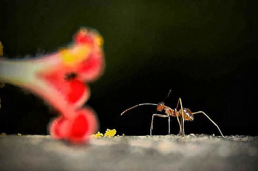 #ants #macro #nature #deadcrap #iheartdeadcrap #flower #flora #floral #macrophotography Animal Wildlife Insect One Animal No People Animals In The Wild Animal Themes Outdoors Full Length Nature Close-up