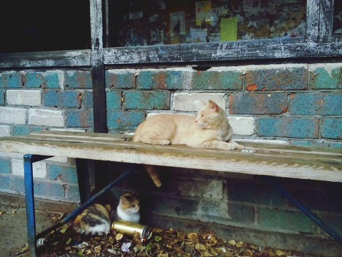 Кисы сидят на остановке..