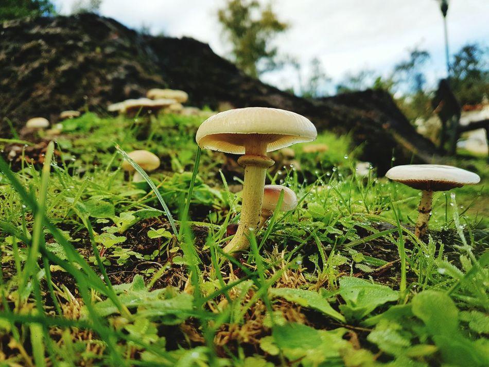 Mushroom Fungus Growth Nature Freshness No People Samsung S7 Edge