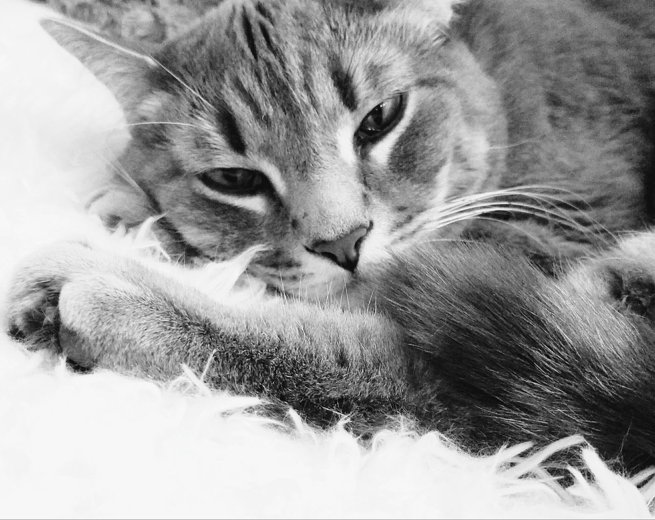 Fine Art Photography Cats Furry Love The Song Of Light MUR B&W Monocrome Photography