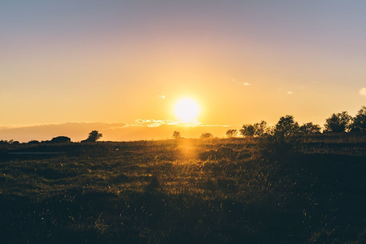 Sun Sunset Nature Beauty In Nature Scenics Tranquil Scene Tranquility Idyllic Landscape Tree Sky Outdoors Growth Sunbeam No People Grass Day