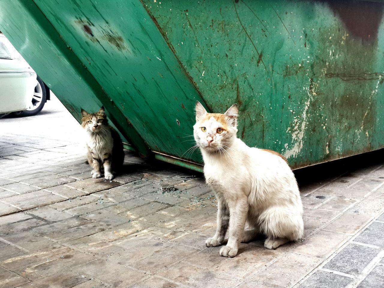 Portrait Of Cats Sitting On Street