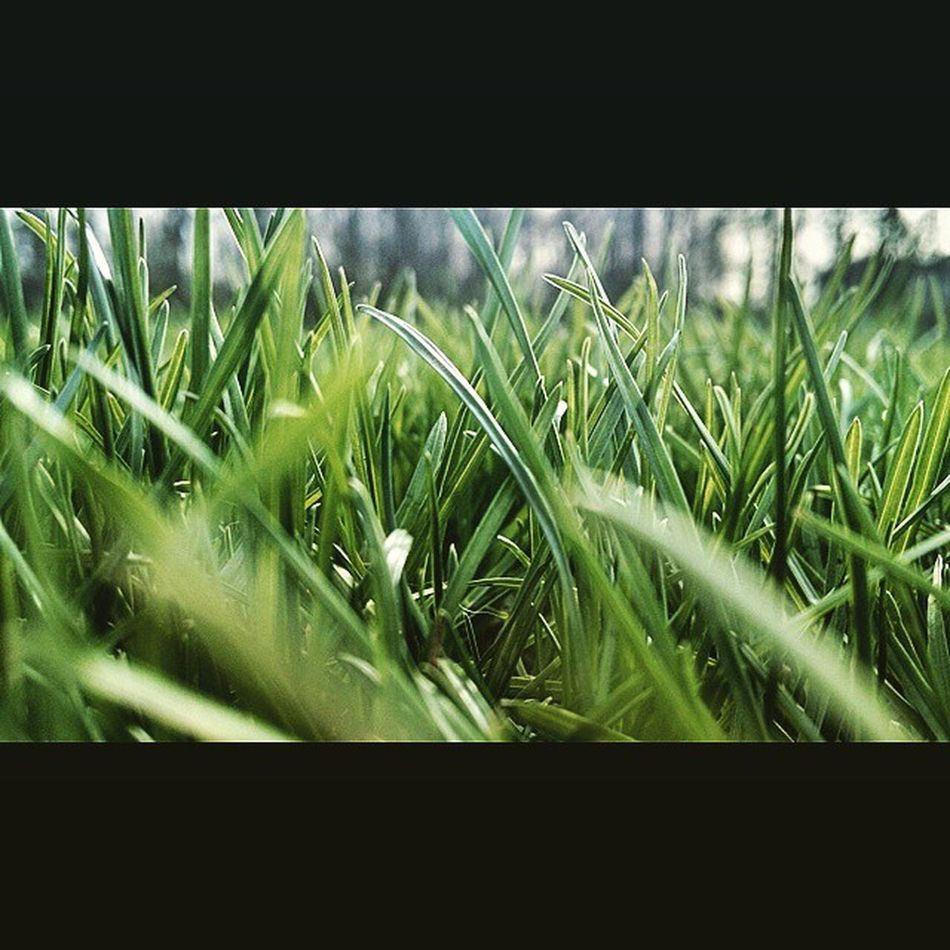 Spring and no school. Photography Spring Grass MayThe4thBeWithYou