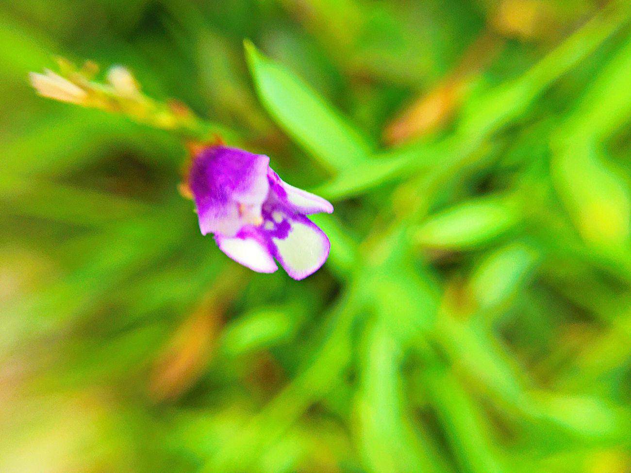 Little flower between the grasses.