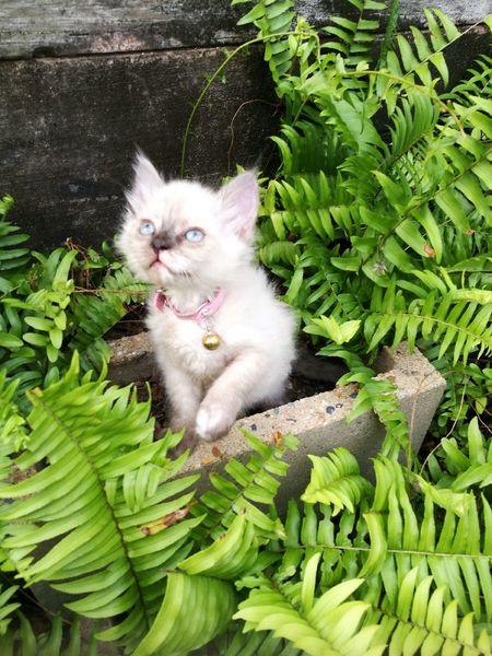 Domestic Cat Feline No People
