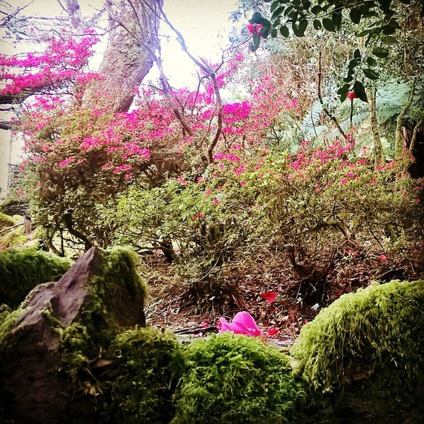 flowers Nature No People Beauty In Nature Day Outdoors Freshness Pink Color Tree Plant Travel Destinations Green Color Happy Time Beautiful View Enjoy The View Ringofkerry Ireland Ring Of Kerry ireland