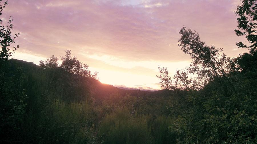 Atmosphere Atmospheric Mood Cloud Cloudscape Cloudy Dramatic Sky France L'Estréchure Light Majestic Moody Sky Mountain View Nature Orange Color Orange Sky Outdoors Panorama Plant Provence Scenics Sky South France Sun Sunset Tranquil Scene